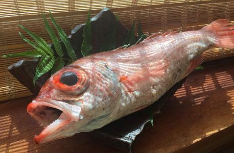 のどぐろ 旬の時期|魚選びのプロがおすすめするノドグロの美味しい食べ方